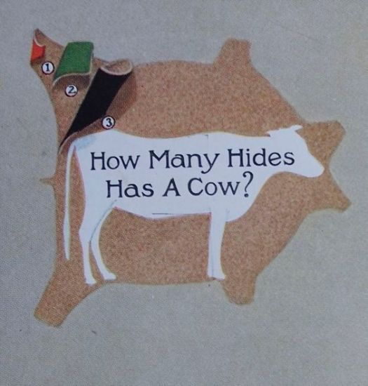 how many hides has a cow